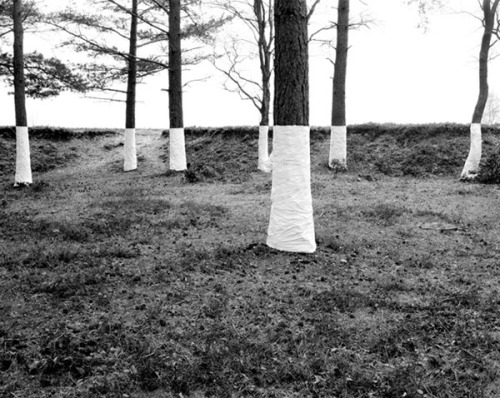 "© Zander Olsen, 2004, 'No Mans Land' (from the serie 'Tree, Line') ""This is an ongoing series of constructed photographs rooted in the forest. These works, carried out in Surrey, Hampshire and Wales, involve site specific interventions in the landscape, 'wrapping' trees with white material to construct a visual relationship between tree, not-tree and the line of horizon according to the camera's viewpoint."" (more here) (thanks to / via: cruello)"