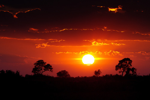 Great African Sunrise (by Wild Dogger)