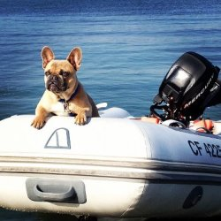 hankthefrenchie:  Yep, this my boat. JEALOUS? just Drink. it. in. -Hank Pic courtesy of Sloan  so awesome…this pup