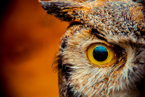 sun-stones:  Hoo? Hoooo? Why, It Was Eye, Of Course. by Lotus Carroll on Flickr.