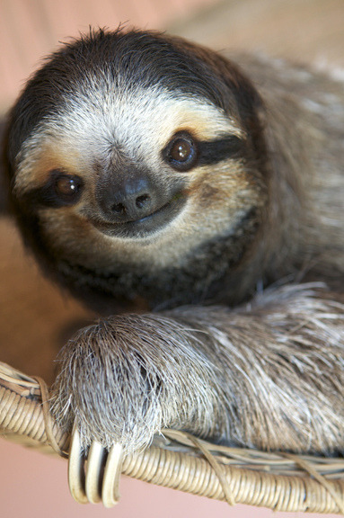 Smiling Sloth photo: Hotshotjen