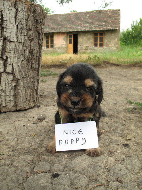 lolzpicx:  what if hes a mean puppy and its a trick