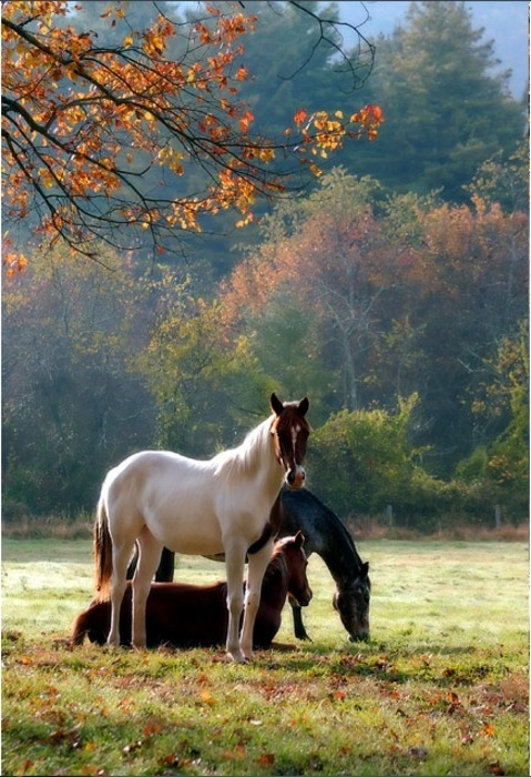 lalulutres:  wild horses taking five