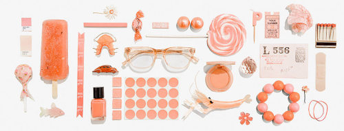 thingsorganizedneatly:  WARBY PARKER  all great things! s.s. check it!