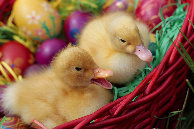 HAPPY  EASTER !!! by venkane on Flickr.