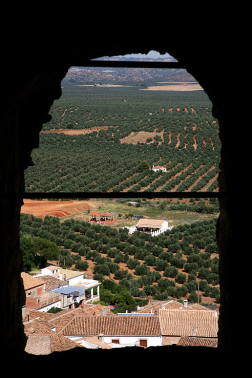 10 Food Trails Worth the Flight | Spain's Olive Oil Greenway
