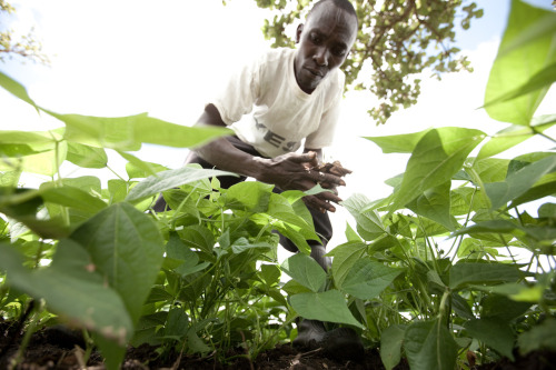 Johnson, a small farmer in rural Kenya, is hard at work every day as he tends to his crops. With the help of an irrigation pump, he is able to grow enough food to feed his family and sell the surplus to his community. Learn more at www.theadventureproject.org.