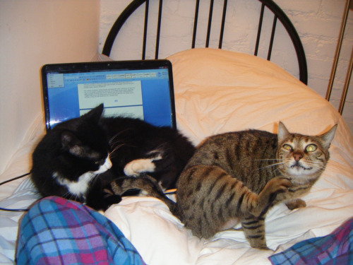 getoutoftherecat:  cats. stop. NEITHER of you can sit on the computer.