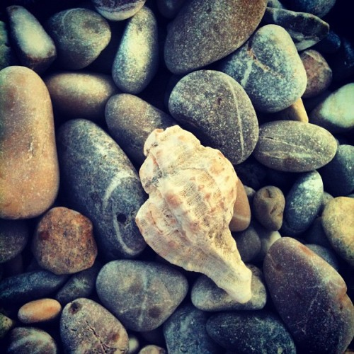 #sea #shells on the sea #shore  (Taken with Instagram)