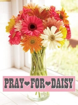 "Organic Bouquet has kindly started a Daisies for Daisy campaign donating a % of sales to Daisy. We are grateful to be included in their ""Flowers for Good"" program. Check it out!"