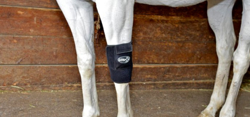 Wearable ultrasound device treats animal injuries (via Springwise)
