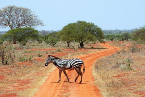 Tsavo landscape by radimersky on Flickr.