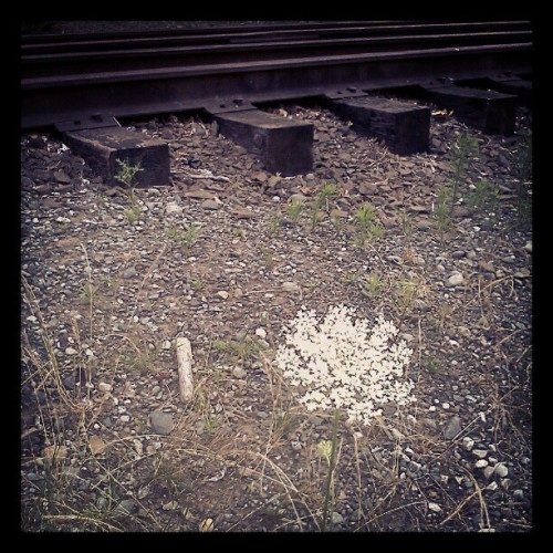 Flower by the railroad tracks… Couldnt get a very good shot with my phone. :( (Taken with Instagram)
