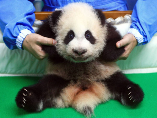 (via pandaspandas)