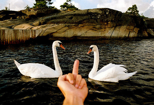 Swans are Evil by coreyfishes on Flickr.