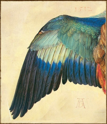 500-daysofart:  Albrecht Dürer 'Wing of a European Roller' (modified) 1512 Watercolor and gouache on vellum
