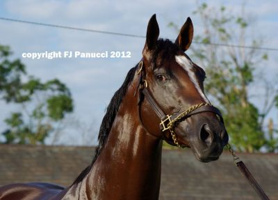Gemologist fans, relax! Todd Pletcher said the Wood Memorial (I) winning Tiznow colt displaced his soft palate during the Haskell (I)— the same breathing problem suffered by Blind Luck in last year's Vanity (I)— forcing him to tire dead last in his comeback race despite some really nice breezing. He was also found to have a lung infection with some mucus in the mix, so he is set to be on antibiotics for one week and will have his path decided from there. (Photo by Frank Panucci)