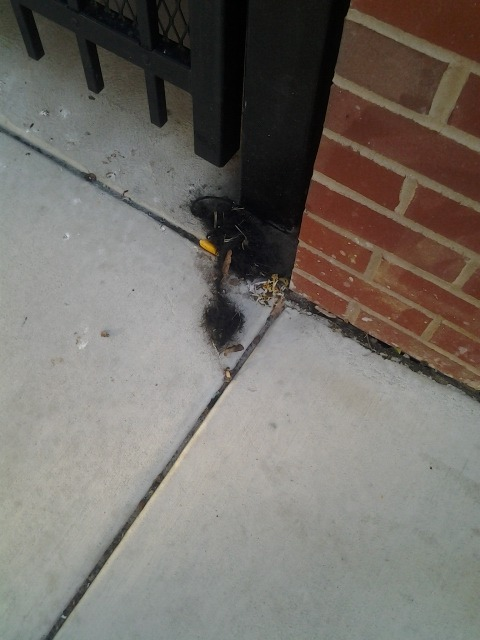 tumble weave. 23rd & Grays Ferry Ave, Graduate Hospital