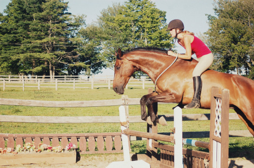 haleybreen: me and the doc today - he is so good haha please ignore my eq. I'm tackless and also he took off kind of long oh and note his disinterest. he does not like fences lower than 3'6… photo by qwertzponies summer '12  because I need more good photos with me and Nemo that aren't blurry, are in focus, and have decent timing so for now I'm reblogging again I ride him like this all the time but I only have a handful of photos to show for it D: whine he's such a good boy :D