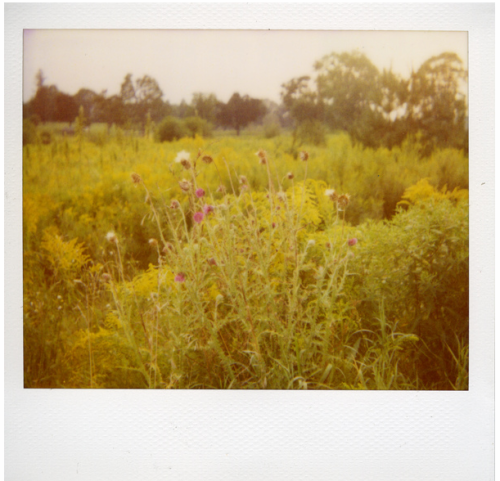 Polaroid by Flickr user BunnySafari