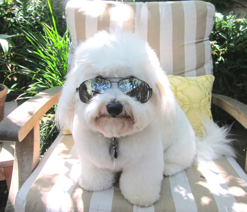 PHOTO OP: Cool Dog, or Coolest Dog? Jackson, submitted by Michael Moore.