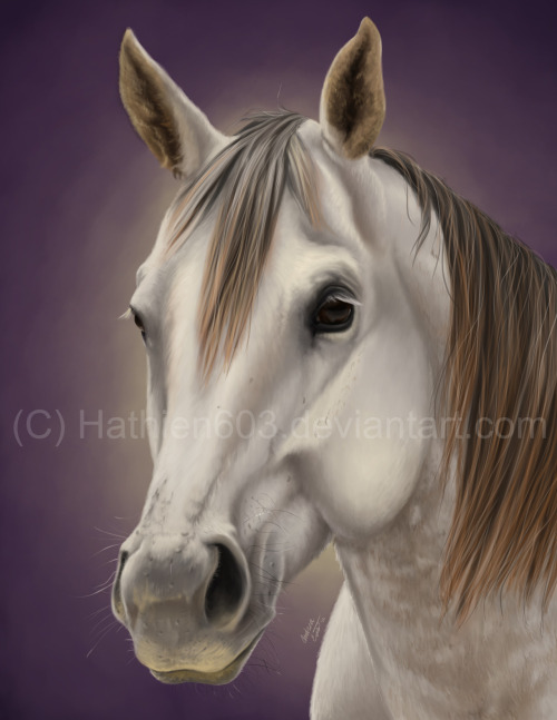 Finished a realistic commission for a friend of her favorite school mare :)