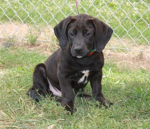 And then you find a corgi-lab mix… I may or may not be weeping uncontrollably right now