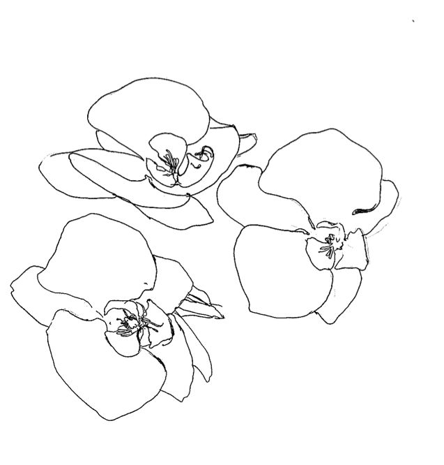 incanti:  scribbly orchids, by me