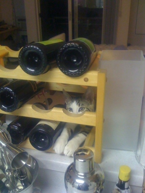 "catasters:  ""I know I should give up drinking; but I am not a quitter"""