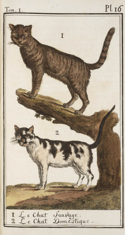 lindahall:  Wild and domesticated cats in Georges Buffon's Histoire naturelle, 1785.