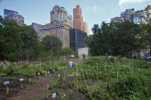 heading over to Battery Urban Farm today—check out what these environmentally-consciouskids were able to do #inspiration #hope