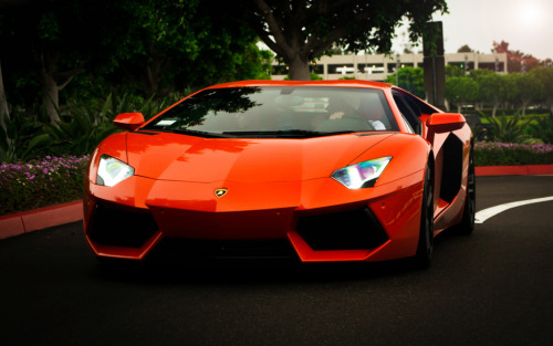 Waiting for my target Starring: Lamborghini Aventador (by Bernardo Macouzet Photography)