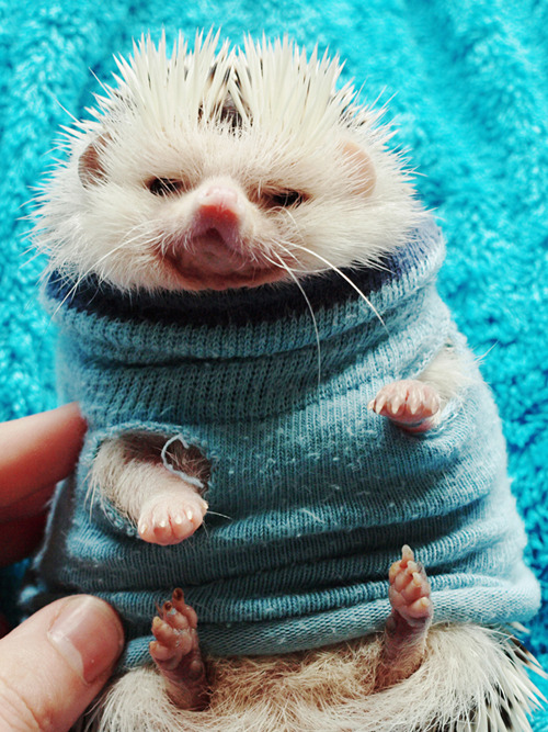 lokithehedgehog:  You really woke me up for this?