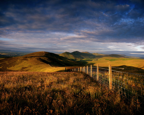 Scald Law from Allermuir Hill » by ►►M J Turner Photography ◄◄