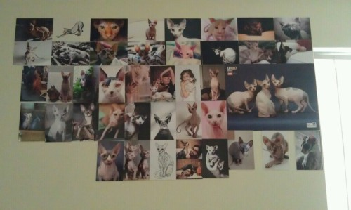 I'm working on getting all 73 photos on my wall. I ran out of tape though. D: