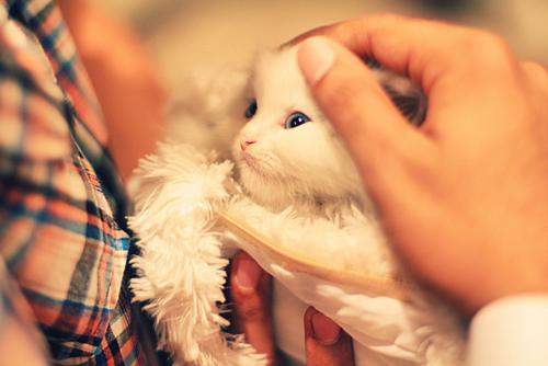 kittenssssss