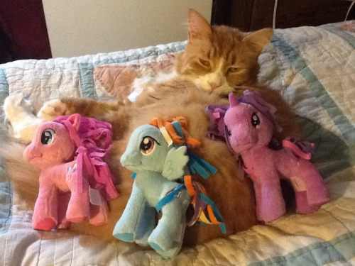 My cat already tolerates ponies…