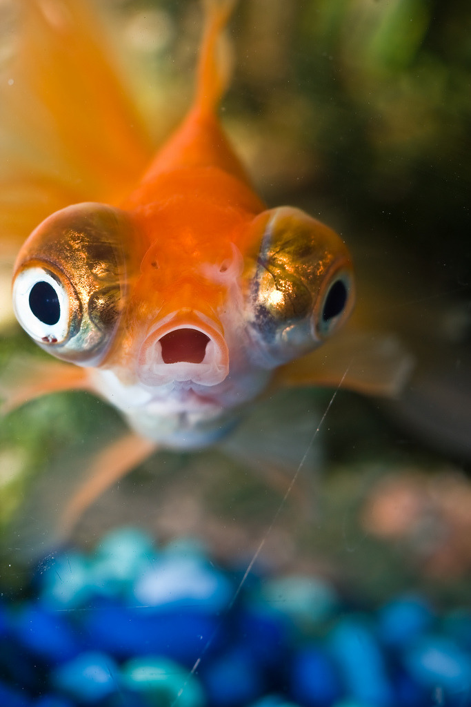 magicalnaturetour:  Surprise!!! (by Benson Kua) :)