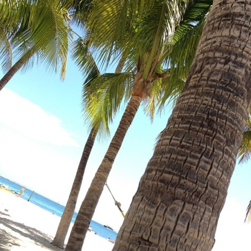 Relaxing #vacation #islaMujeres #summer2012 #beach #palmtrees  (Taken with Instagram at Playa Norte)