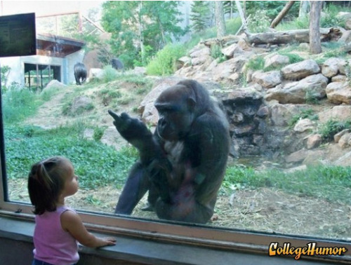 collegehumor:  Gorilla Flips Off Kid You're bound to be a little grumpy if you spend most of your life in a cage.