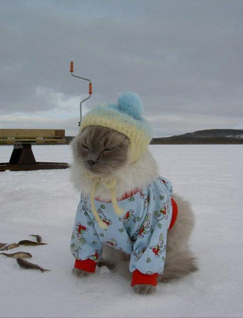 [Photo via Dress-up Kitties]