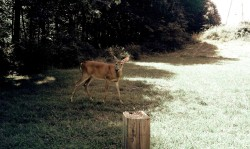 """A wounded deer leaps the highest"" - Emily Dickinson : )"