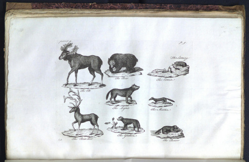 The elk, &c. by Library & Archives @ Royal Ontario Museum on Flickr.