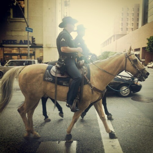 Now that's an odd sight to see in #LosAngeles. #cool #la #police #horses #fast #horse #animal #nature (Taken with Instagram at Macy's Plaza)