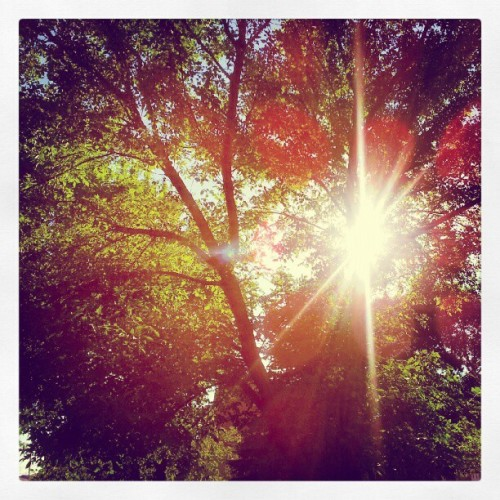 sunburst (Taken with Instagram)