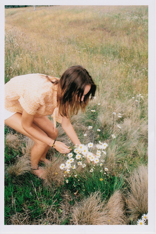 "roily:  Paper Daisies #2 (by Claudia Smith"")"