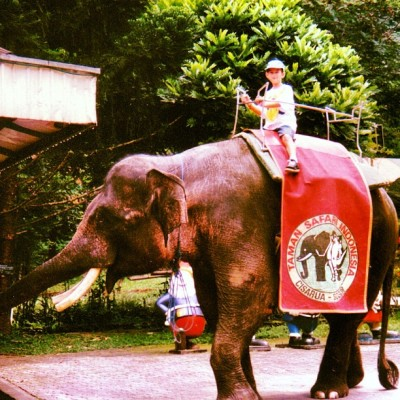Surprisingly, I rode a lot of elephants as a kid! #perksofgrowingupinsoutheastasia (Taken with Instagram)