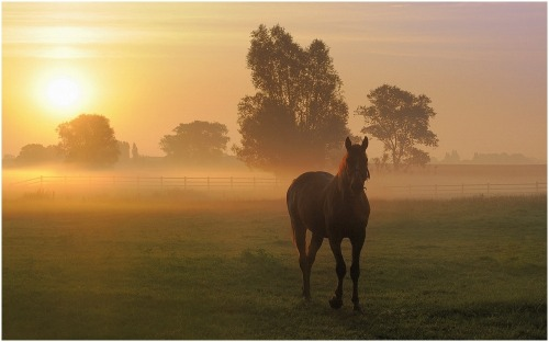 Golden morning by johnyhe melsoen.For the Horse Lovers:)