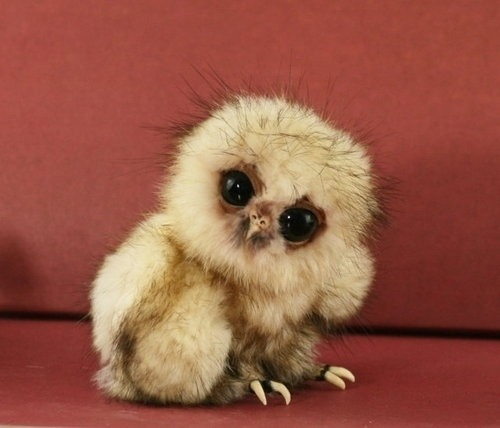 jacqueezay:  Have you had your dose of cute today? These animals are hilariously adorable, especially #4! - ad http://goo.gl/GqLkm Aww!