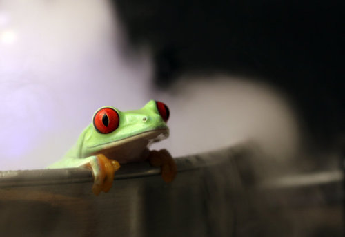 captivating-animals:How to boil a frog 1 for Print by *AngiNelson Just hanging around